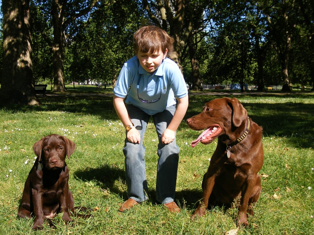 Dog Training Kp Pets